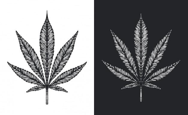 Foglie di cannabis o marijuana schizzo vettoriale Vettore Premium