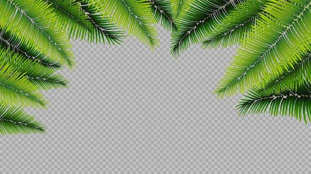 Foglie di palma isolate, fondo Vettore Premium