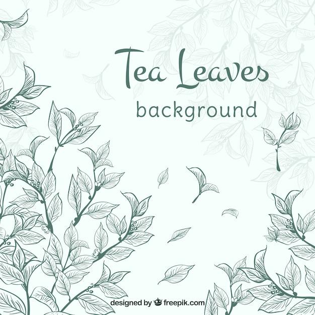 Foglie di tè sfondo con piante Vettore gratuito