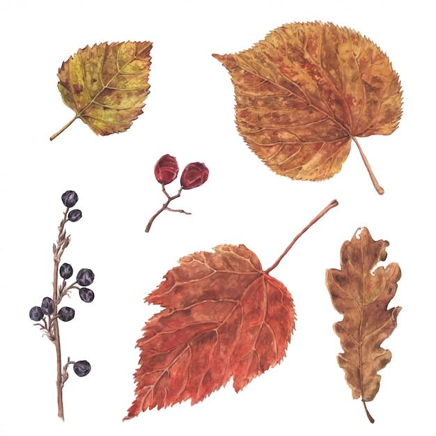 Foglie e bacche disegnate a mano dell'acquerello, autunno, elemento della decorazione di caduta, illustrazione botanica Vettore Premium