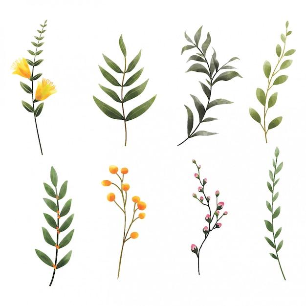 Foglie e fiori di stile dell'acquerello Vettore Premium