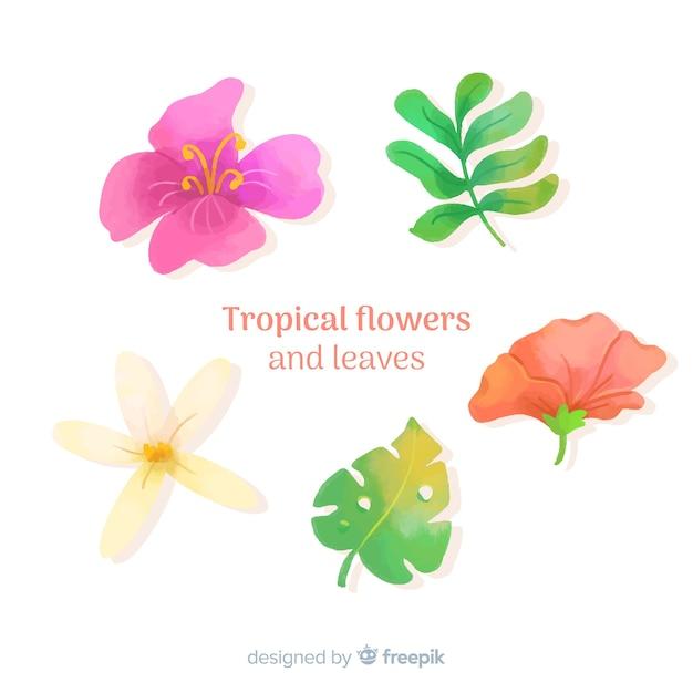 Foglie e fiori tropicali Vettore gratuito