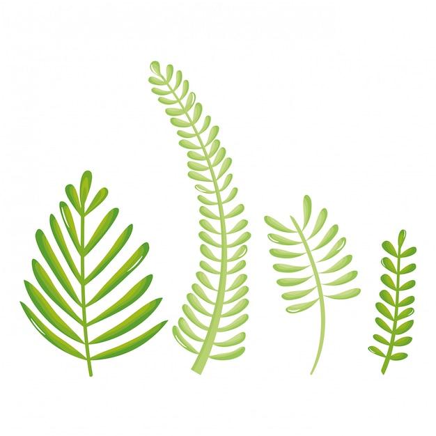 Foglie palme ecologia set icone Vettore Premium