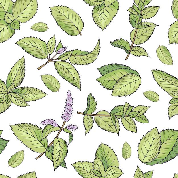Foglie verdi di menta fresca. vector seamless. illustrazione senza cuciture del modello della foglia di verde della menta Vettore Premium