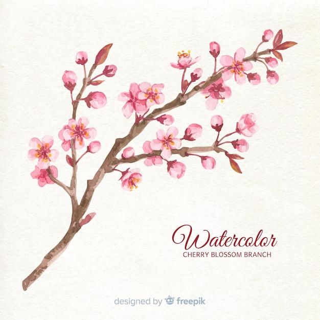 Fondo del ramo del fiore di ciliegia dell'acquerello Vettore gratuito