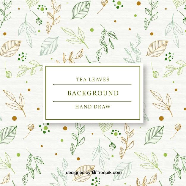 Fondo disegnato a mano delle foglie di tè Vettore gratuito