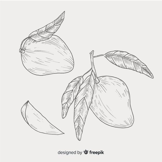 Fondo incolore del mango disegnato a mano Vettore gratuito