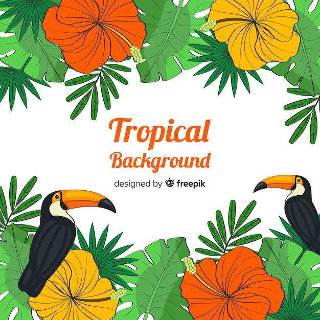 Fondo tropicale disegnato a mano delle piante e degli uccelli Vettore gratuito