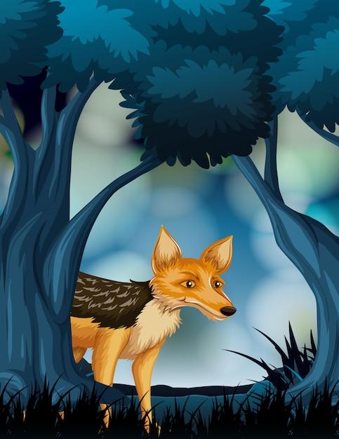 Fox in scena natura oscura Vettore gratuito