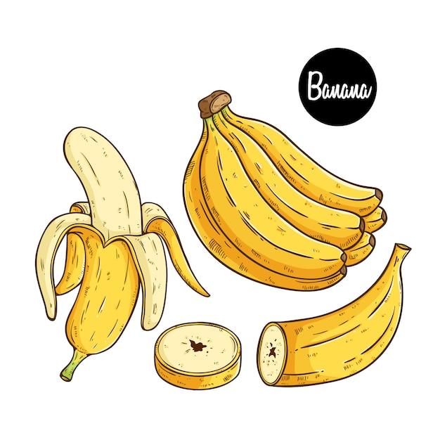 Frutta banana fresca con stile schizzo colorato Vettore Premium