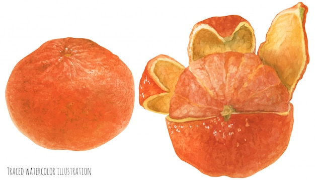 Frutta mandarini arancioni Vettore Premium