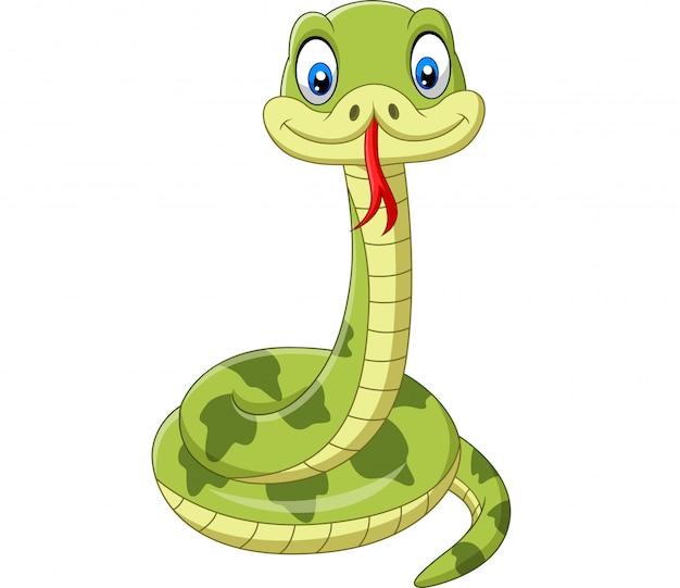 Fumetto sveglio del serpente verde isolato Vettore Premium