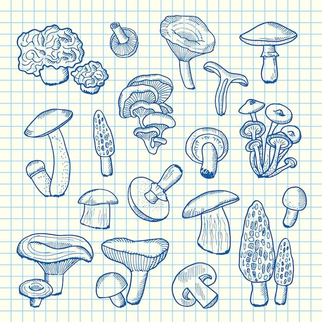 Funghi disegnati a mano sul foglio di cellule Vettore Premium