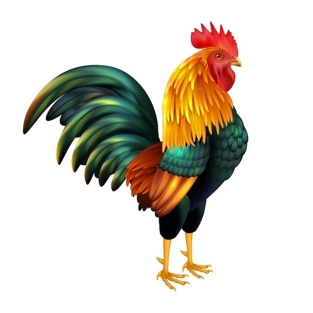 Gallo realistico colorato Vettore gratuito