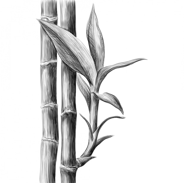 Gambo e foglie di bambù Vettore Premium