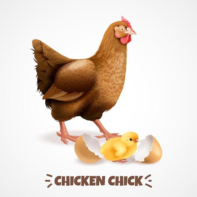 Generi la gallina con il pulcino recentemente covato con il manifesto realistico dell'elemento del ciclo di vita del primo piano del guscio d'uovo Vettore gratuito