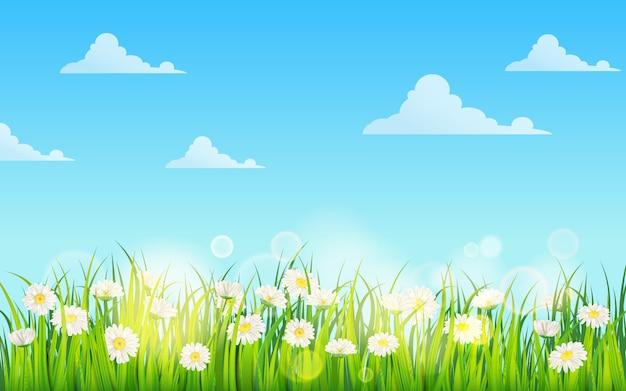 Giacimento della primavera dei fiori delle margherite, della camomilla e dell'erba succosa verde, prato, cielo blu, nuvole bianche Vettore Premium