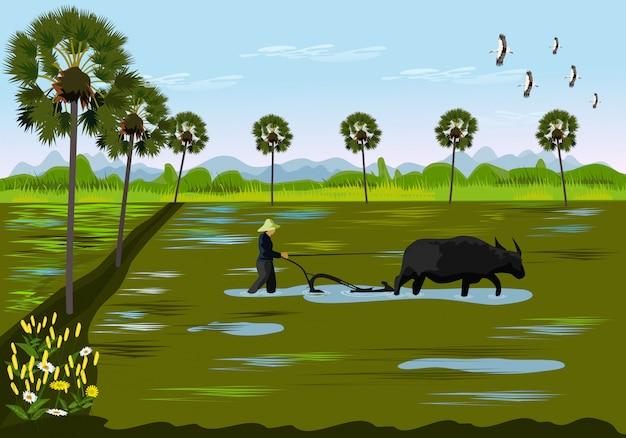 Gli agricoltori stanno scavando il terreno usando il bufalo nelle risaie Vettore Premium