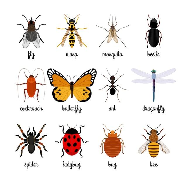 Gli insetti vector su sfondo bianco Vettore Premium