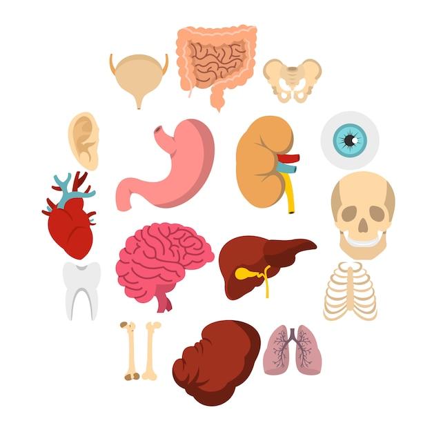 Gli organi umani hanno messo le icone piane Vettore Premium