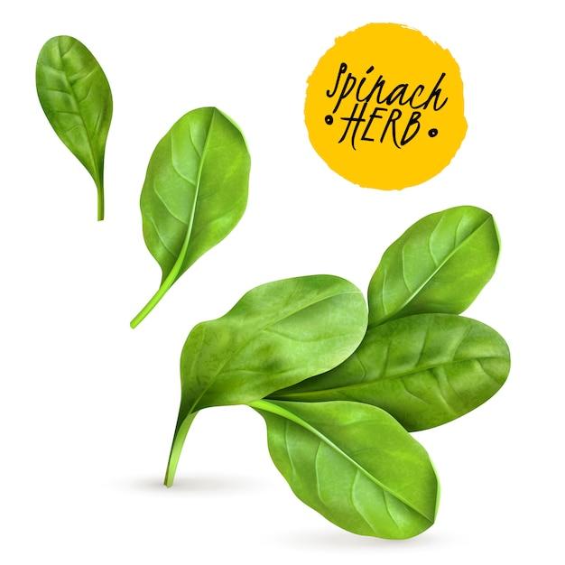 Gli spinaci freschi del bambino lascia l'immagine di verdure popolare realistica che promuove l'alimento sano cucinato e le erbe crude Vettore gratuito