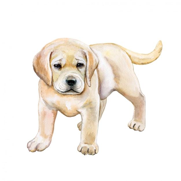 Golden retriever dell'acquerello. cucciolo Vettore Premium