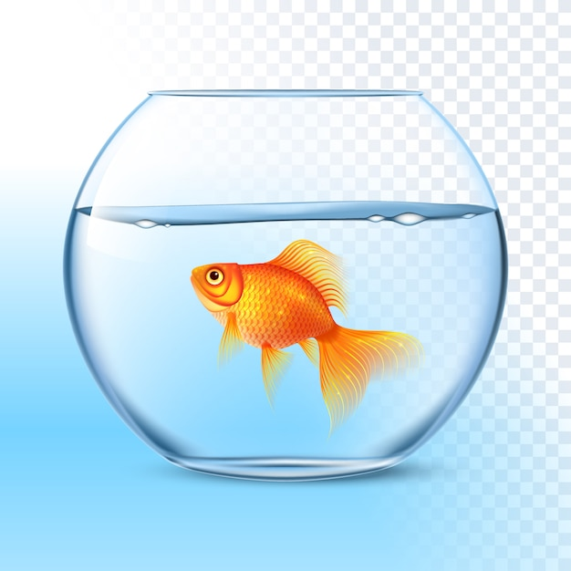 Goldfish in water bowl immagine realistica Vettore Premium