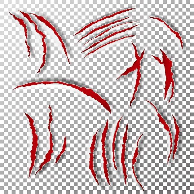 Graffi di artigli Vettore Premium