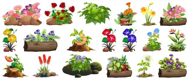 Grande set di fiori colorati su rocce e legno Vettore gratuito