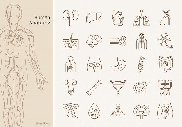 Grande set di icone lineari di organi interni umani con firme. adatto per stampa, web e presentazioni. Vettore Premium