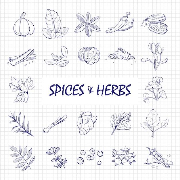 Grande set di spezie ed erbe disegnato a mano sulla pagina del taccuino Vettore Premium