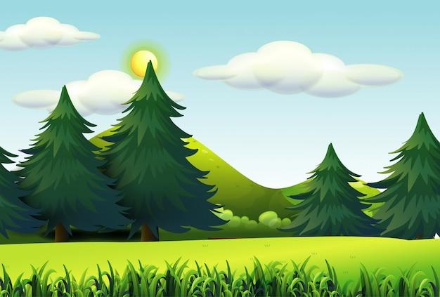 Grandi pini nel fondo della scena della natura Vettore gratuito