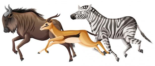 Gruppo di animali selvatici che corrono sul bianco Vettore gratuito