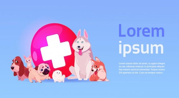 Gruppo di cani felici sopra il concetto veterinario della medicina della clinica del veterinario Vettore Premium