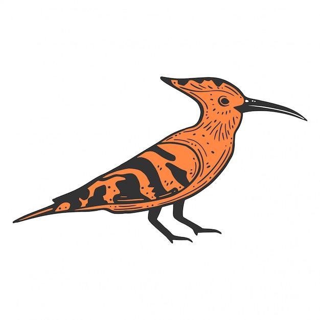 Hoopie wildbird. Vettore Premium