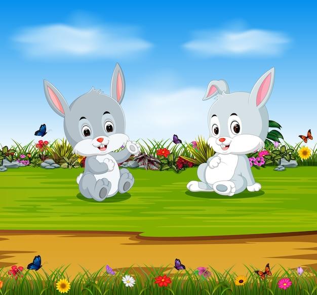 I conigli si rilassano nella giornata di sole a stomaco pieno Vettore Premium
