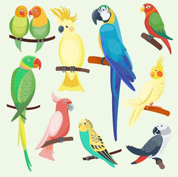 I pappagalli esotici del fumetto hanno messo l'ara tropicale della fauna dello zoo degli uccelli dell'animale selvatico dell'illustrazione isolata Vettore Premium