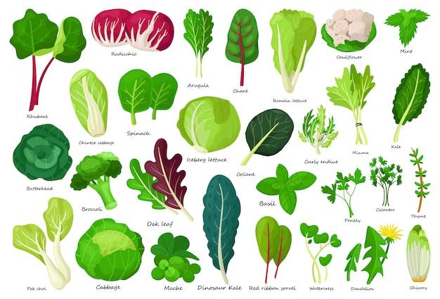 Icona del fumetto di lattuga vegetale Vettore Premium