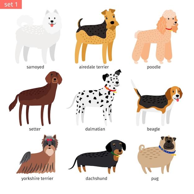 Icona del fumetto di razze canine Vettore Premium
