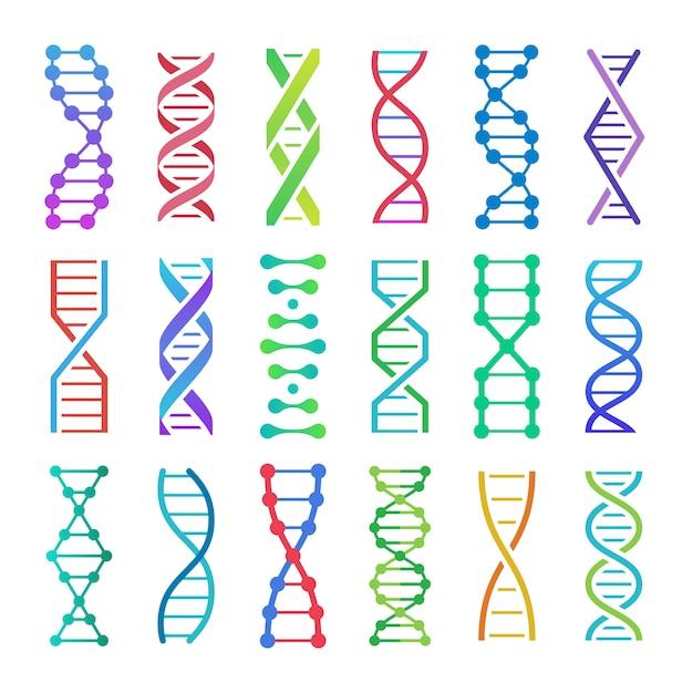 Icona di dna colorato. spirale struttura adn, ricerca medica sull'acido desossiribonucleico e set di icone di codici di genetica della biologia umana Vettore Premium