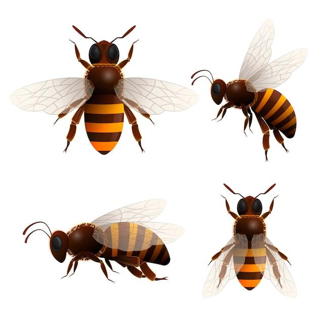 Icone isolate dell'ape del miele messe Vettore Premium