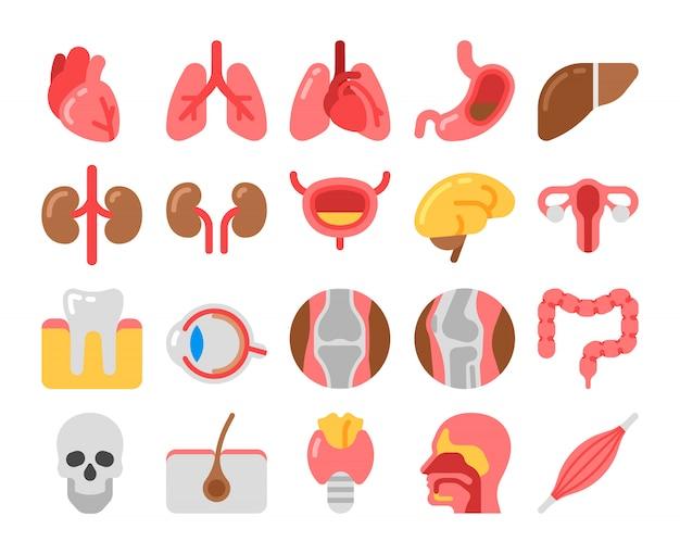 Icone mediche stile piano con organi umani Vettore Premium