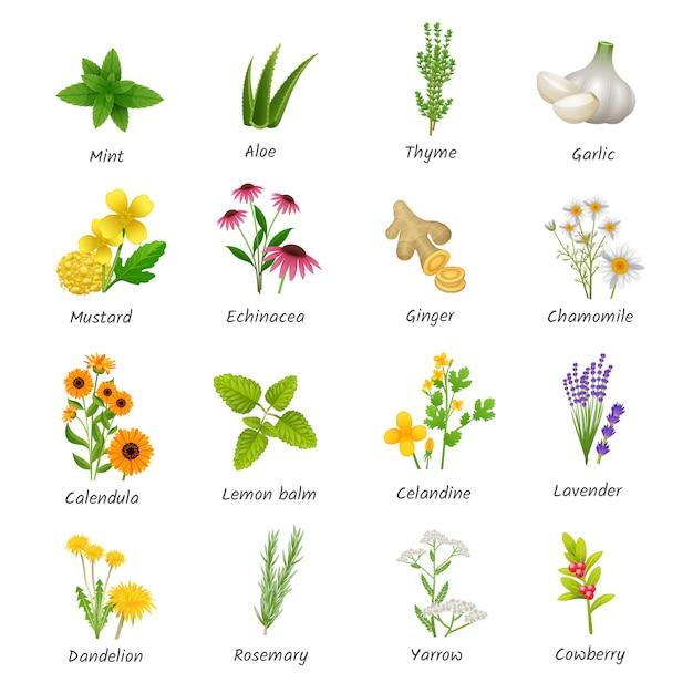 Icone piane di erbe curative e piante medicinali Vettore gratuito