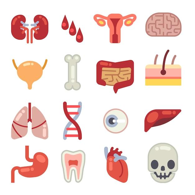Icone piane di vettore degli organi interni umani Vettore Premium