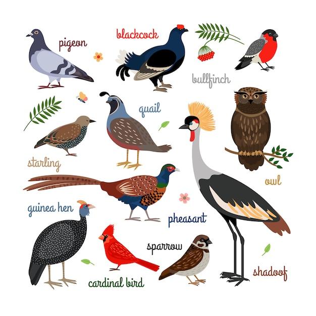 Icone vettoriali di uccelli Vettore Premium