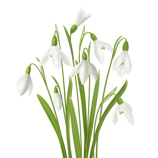 Il fiore realistico di bucaneve ha messo con il mazzo di gambi dei fiori freschi e di immagini dell'erba sull'illustrazione in bianco del fondo Vettore gratuito