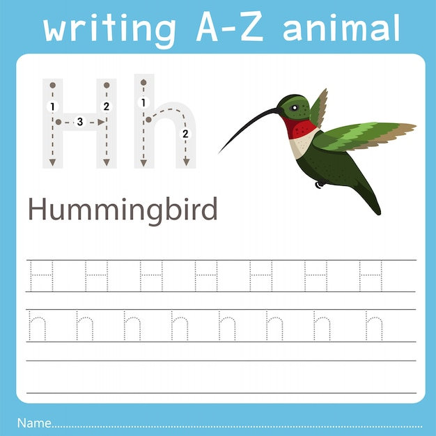 Illustrator che scrive az animal of hummingbird Vettore Premium