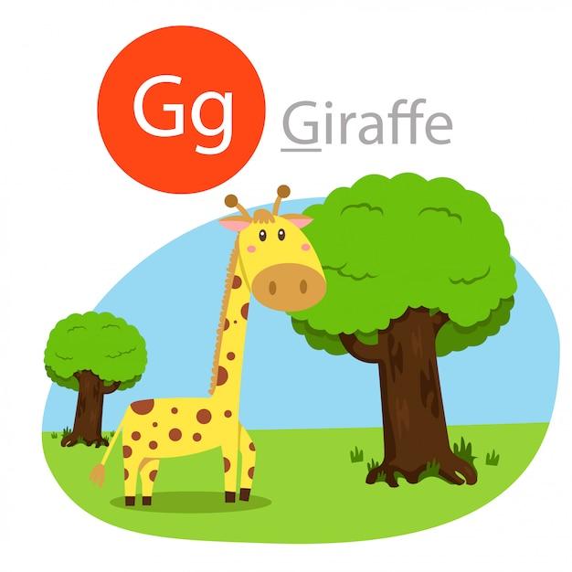 Illustratore di g per animale giraffa Vettore Premium