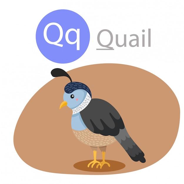 Illustratore di q per animali di quaglia Vettore Premium