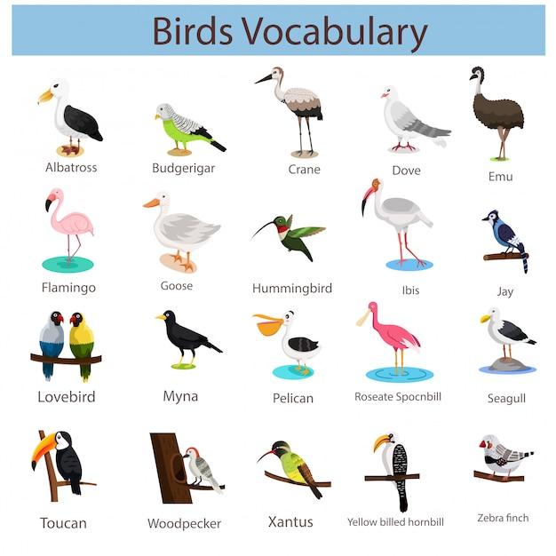 Illustratore di vocaboli di uccelli Vettore Premium